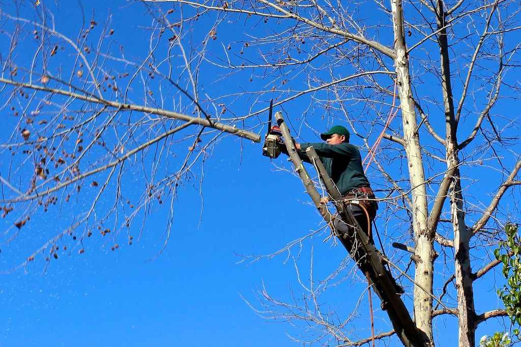 When and how to prune fruit trees