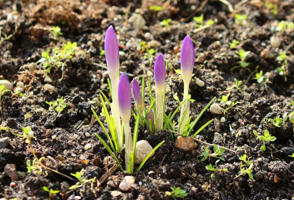 sterilize large amounts of soil