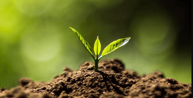 How to add Nitrogen in soil