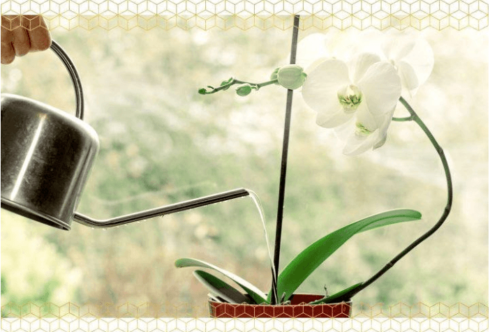 how to take care for orchids