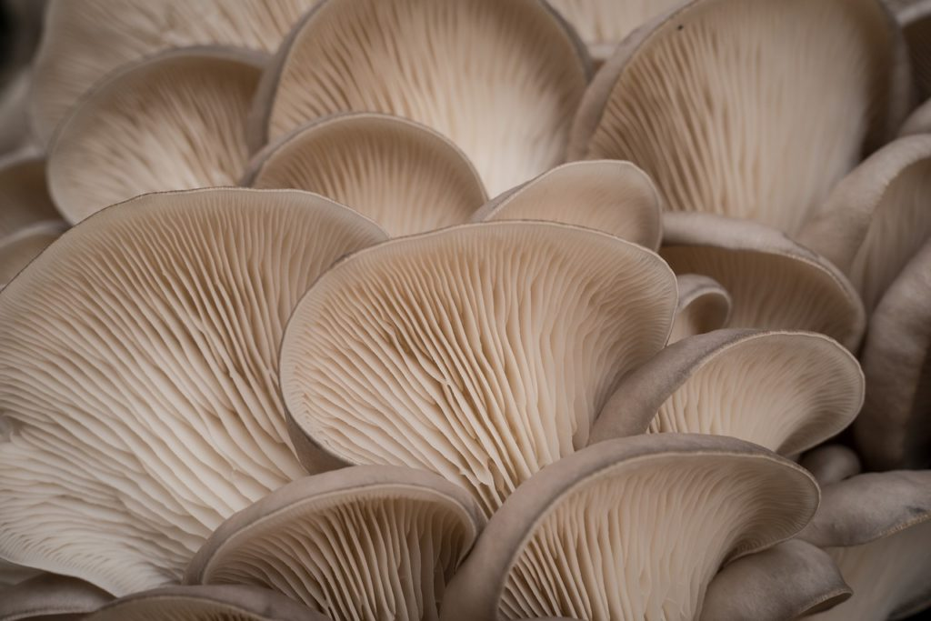 How to grow mushrooms commercially