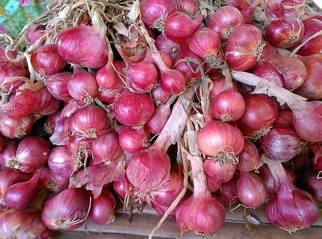 How to grow red onions