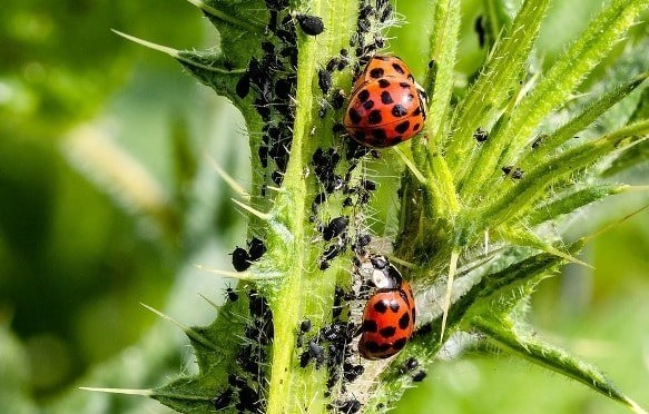 Pest and disease control of garden plants