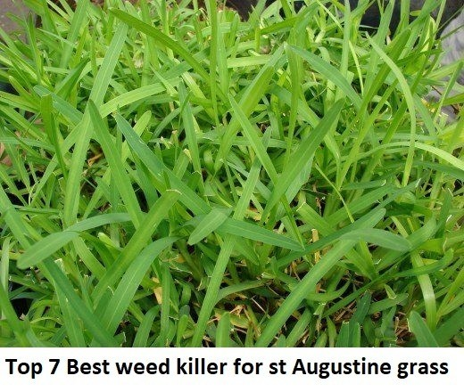 Top 7 Best weed killer for st Augustine grass