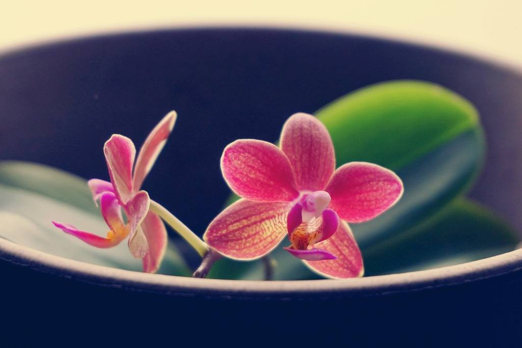 orchids repotting beginners, repotting phalaenopsis orchids