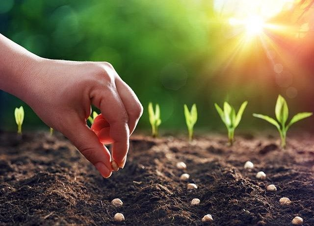 planting and sowing seeds in garden
