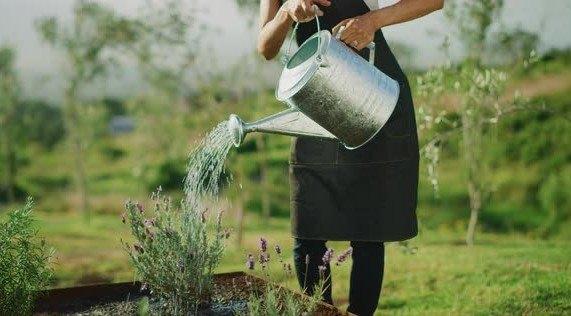 water supply in garden