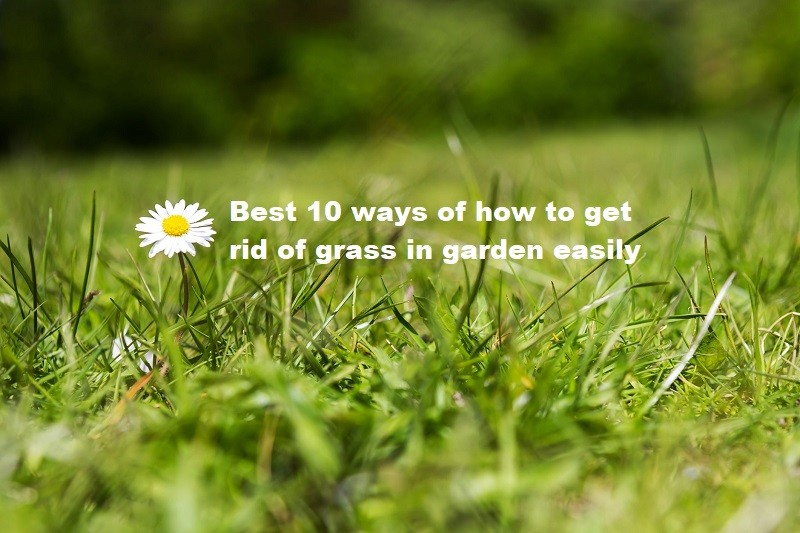 Best 10 ways of how to get rid of grass in garden easily