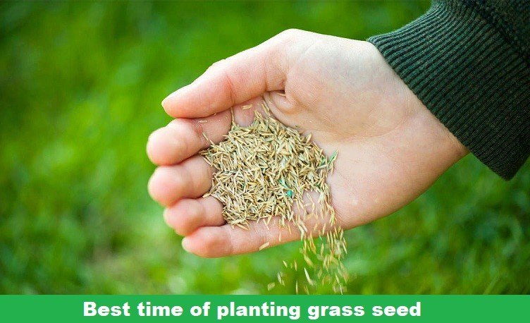 planting grass after killing weeds