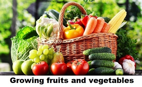 Growing fruits and vegetables by Good Agricultural Practices