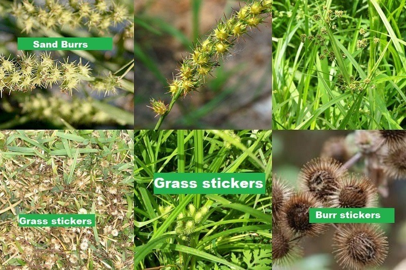 How to get rid of stickers in your yard naturally