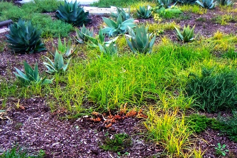 how to get rid of grass in garden easily