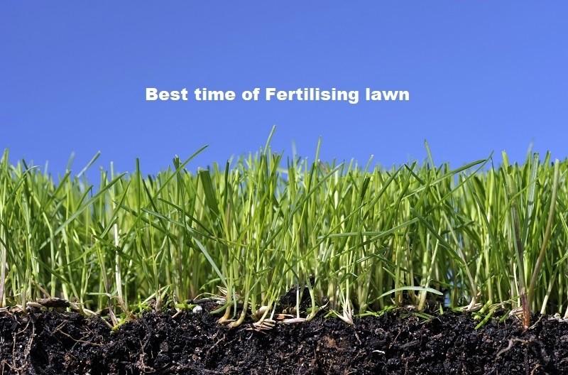 Fertilising lawn