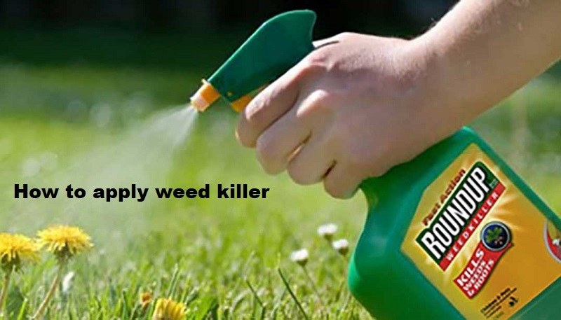 How Long for Weed Killer to Work