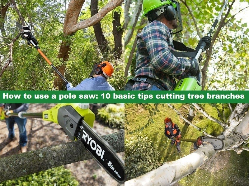 How to use a pole saw_ 10 basic tips cutting tree branches
