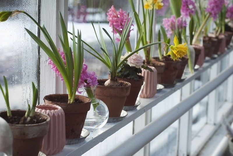 planning a greenhouse for garden
