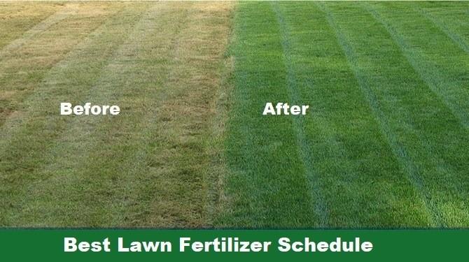 Best lawn fertilizer schedule
