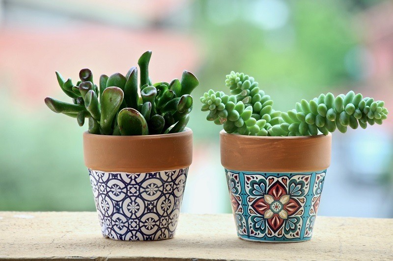 Home decoration with cactus
