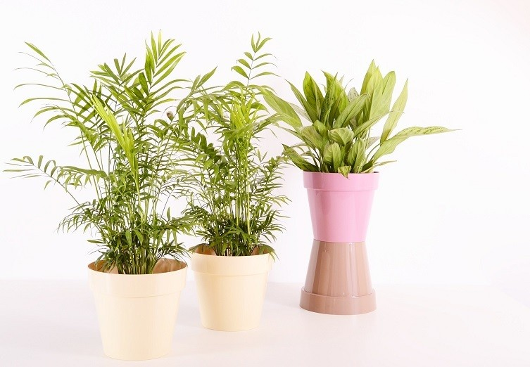 Home decoration with floor plants