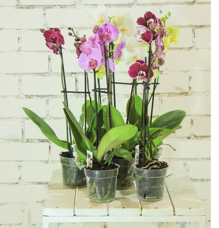 Home decoration with orchids
