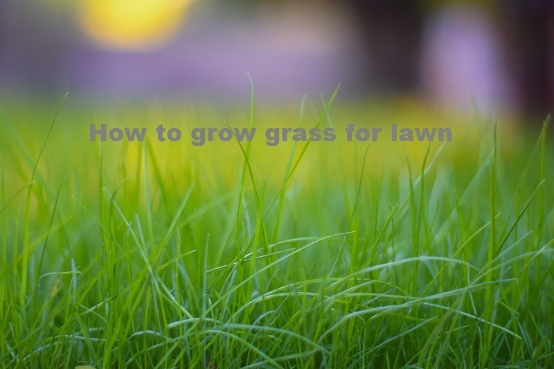 how to grow grass for lawn