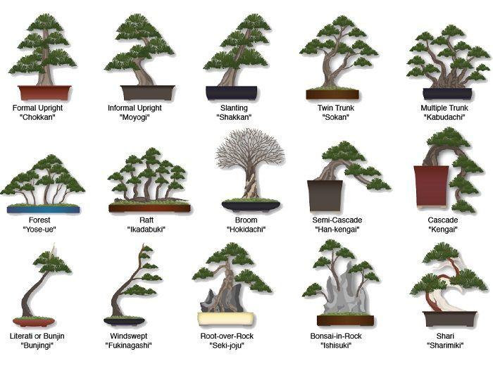 Style of Bonsai trees